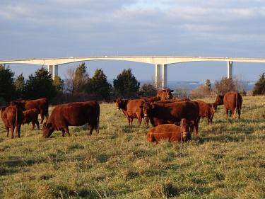 Ri Raised Livestock Local Meat Ri Rhode Island Meat